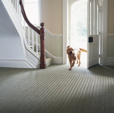 Seagrass Floorcoverings